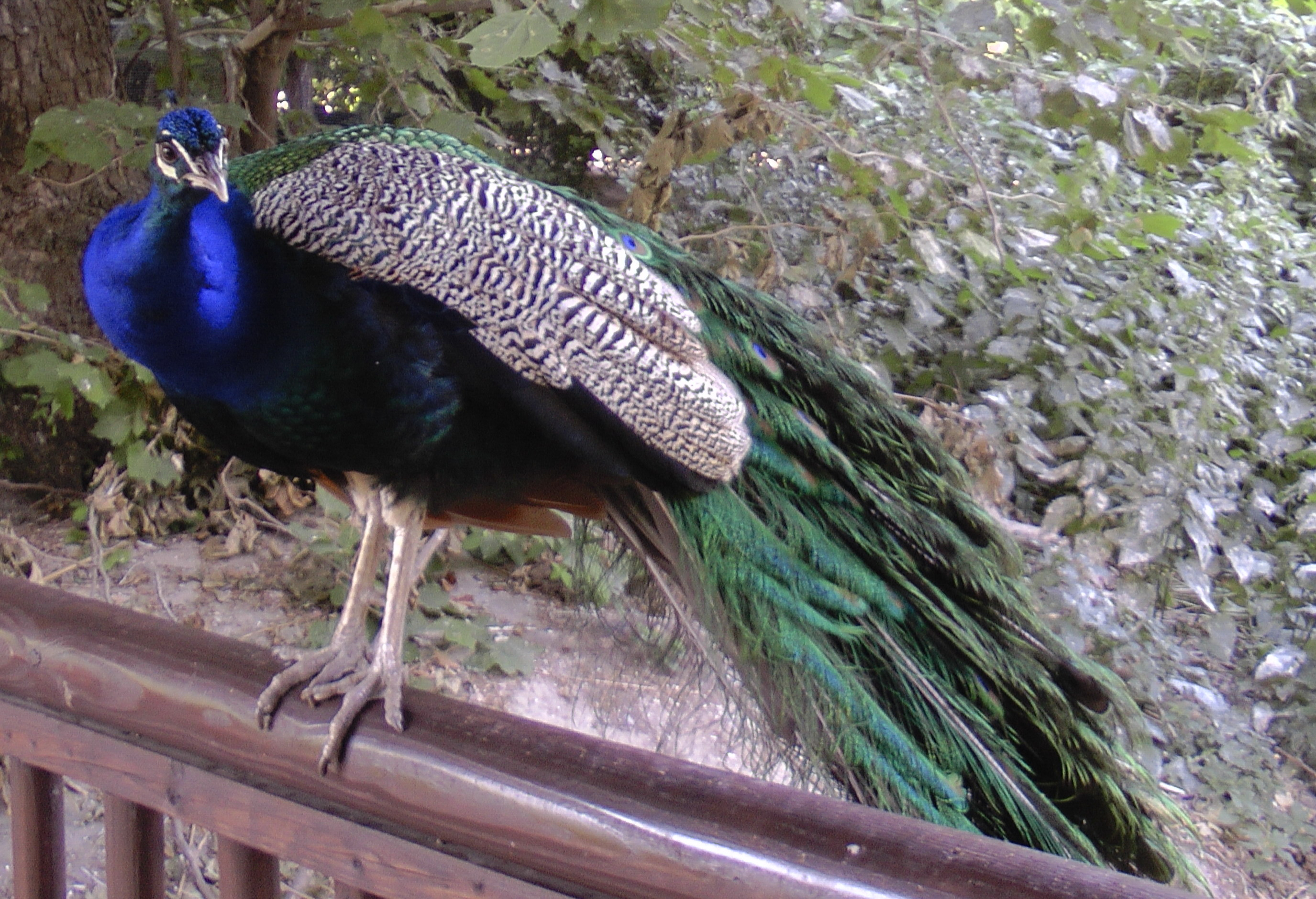 zoo.2